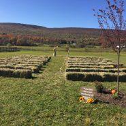 New Leaf Farm 1