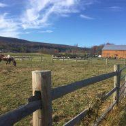 New Leaf Farm 2