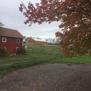 New Leaf Farm 7
